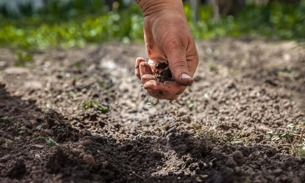 Reasons Why Farmers Should Compost