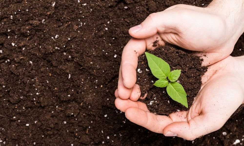 Ways To Improve the Nitrogen Content of Compost
